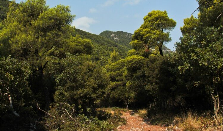 country walks around skopelos, skopelos country villas