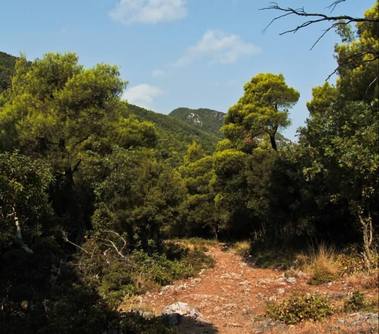 country walks around skopelos, skopelos country villas